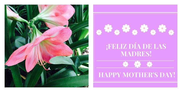 Free Mother's Day Cards in English and Spanish - Hispana ...