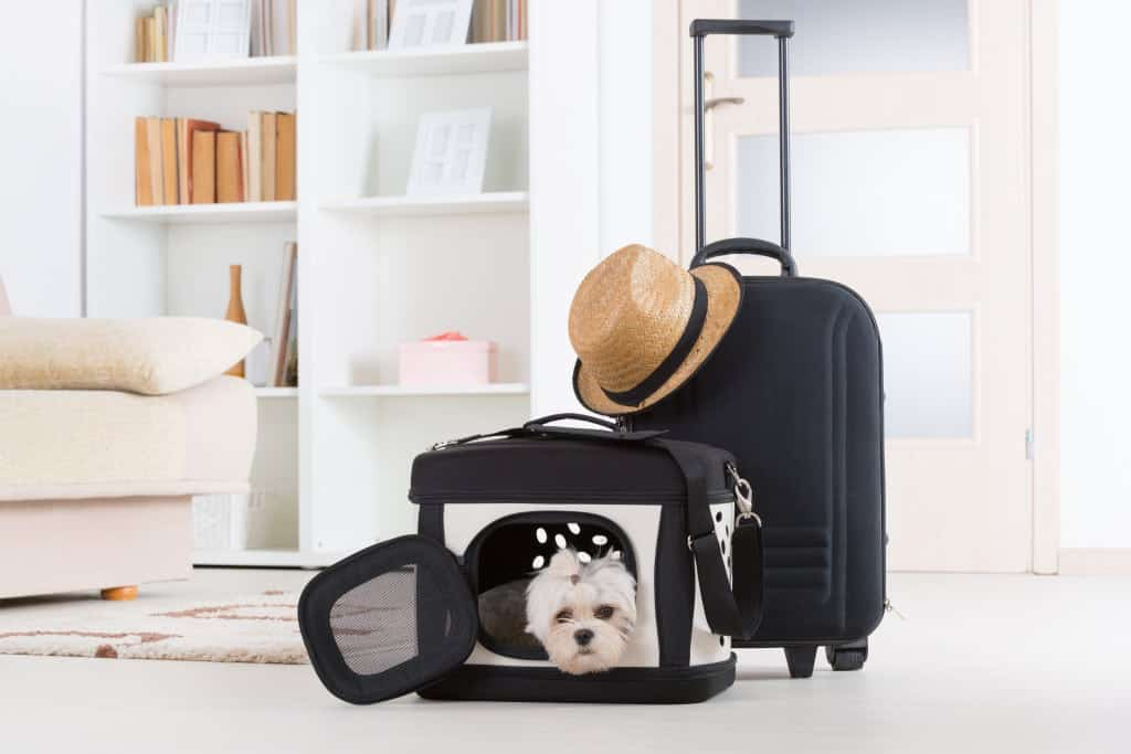 Tips when traveling with pets