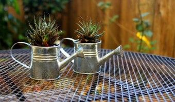 DIY Mini Watering Can Succulents
