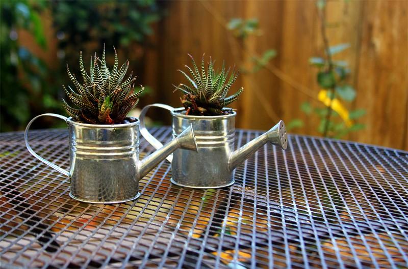DIY Mini Watering Can Succulents