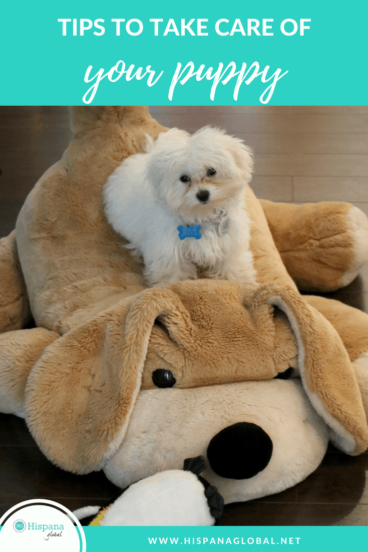 7 tips to take better care of your puppy