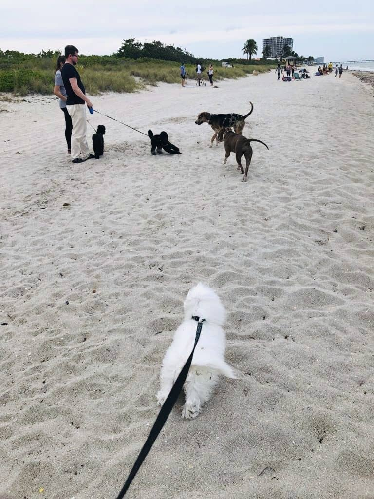 Beaches that allow dogs