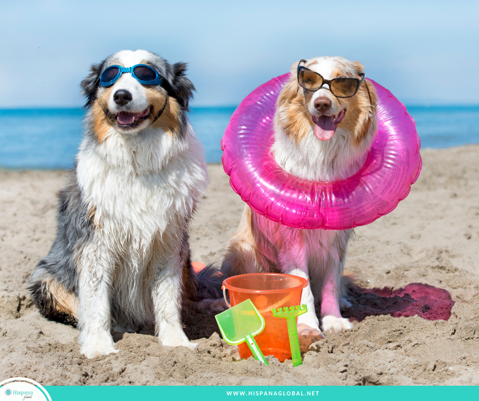 Are you looking for a beach where your four-legged family member can swim, run, and frolic in the sand? Check out these amazing beaches that allow dogs!